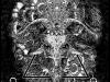 tomdenney_larvae-blackandwhite